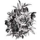 Christmas Rose image
